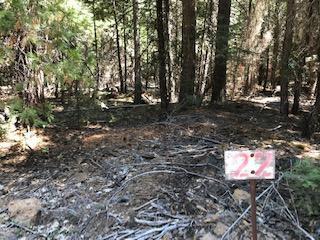 22 Wagon Trail, Shingletown, CA 96088