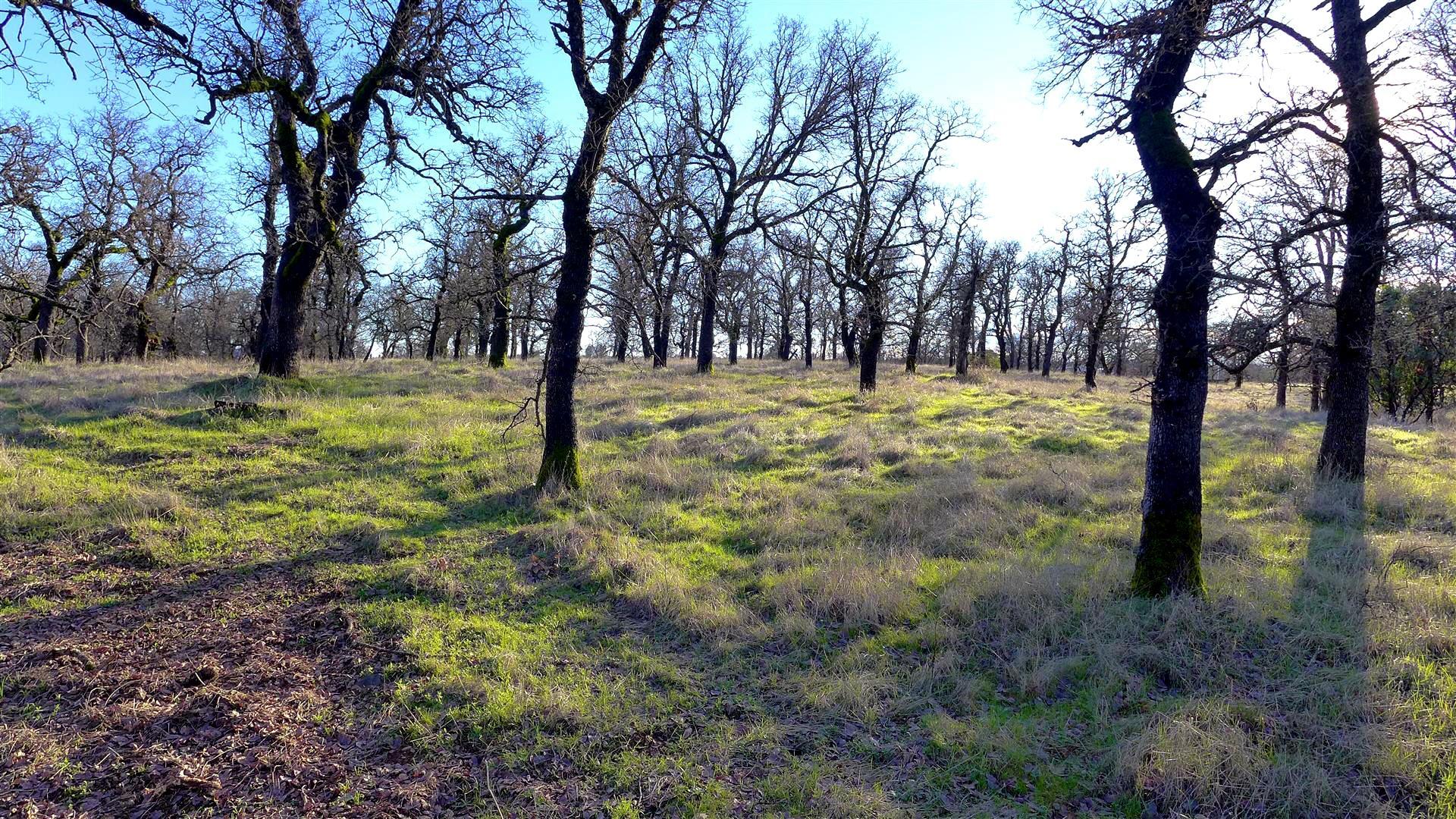 Lot 12 Woodview Dr., Palo Cedro, CA 96073