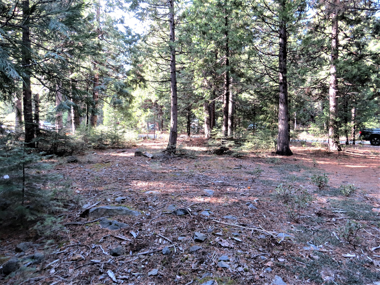 #16 Starlite Pines Rd., Shingletown, CA
