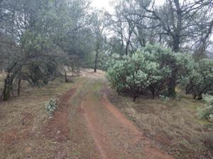 Mylindas Way, Redding, CA 96003