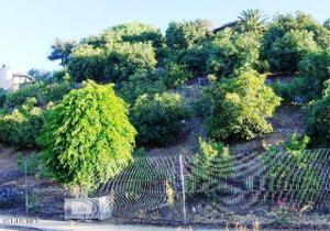 233 View Drive, Santa Paula, CA 93060